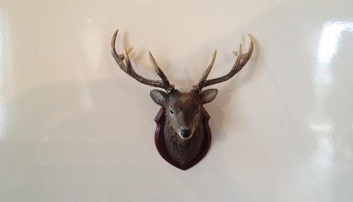 鹿のはく製マグネット
