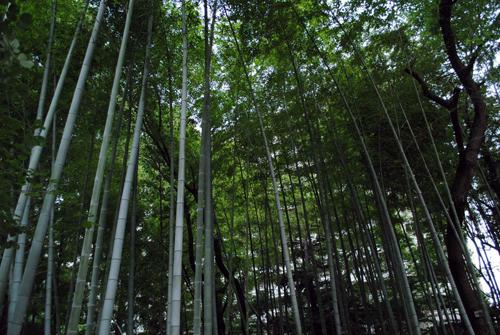 サンシティの竹林